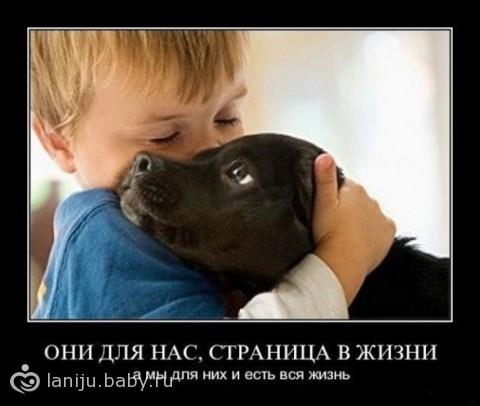 ветеринарная клиника бердск