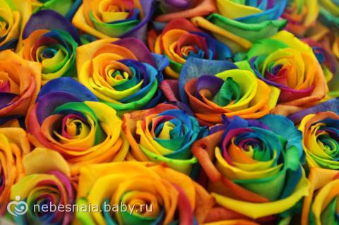 Радужные розы для всех