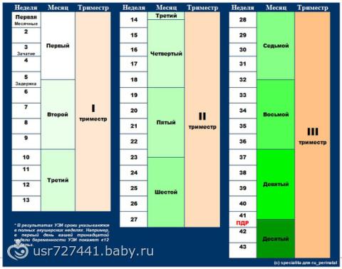 Беременность по неделям и месяцам