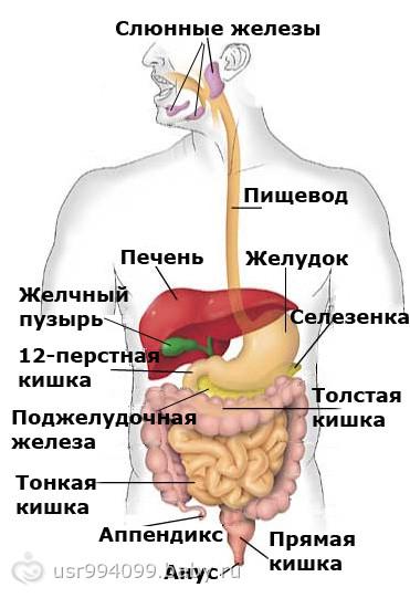 Болит живот при месячных диарея