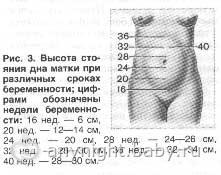 Высота дна матки по неделям подробное описание