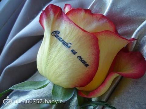 Сын розы