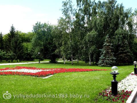 фото белок в парке