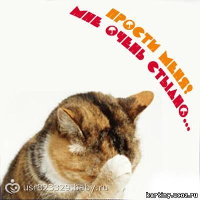 Милые котята 20 фото  Кошки шоу