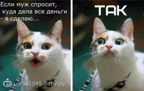 Дорогой a ты впустил кота