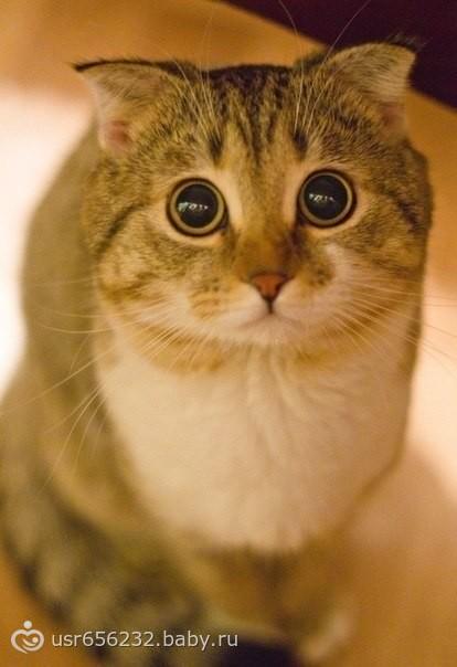 Кот с глазами большими фото и