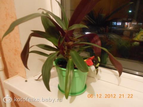 флешмоб «цвет в доме», фотоотчет