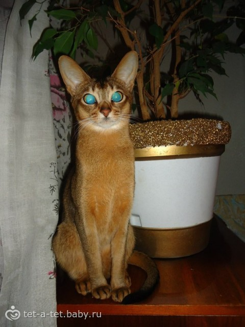 Шкодник кот