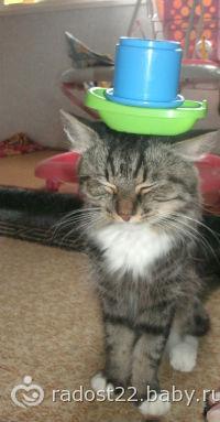 Мой кот!!! такого еще не было)))))))))