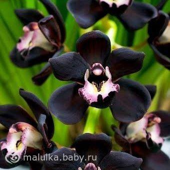 Спб купить орхидеи