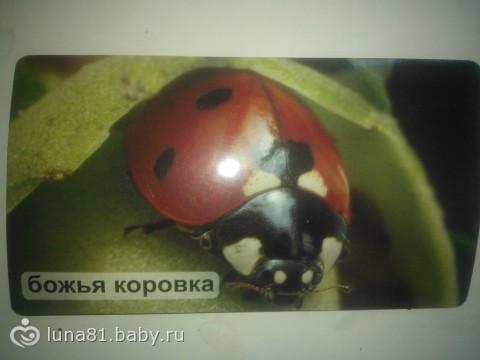 Про божьих коровок)