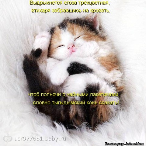 Котоматрица)