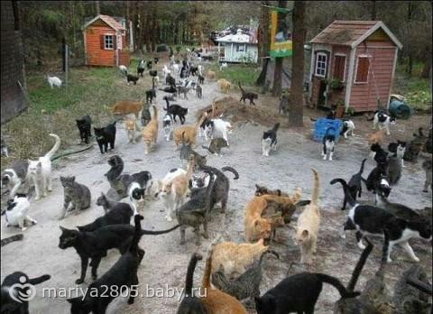 Я нашла ваших котов.Всех сразу.Вы достали уже!!!!!!!!!!!